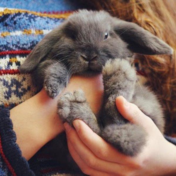 ik wil zó graag een konijntje!