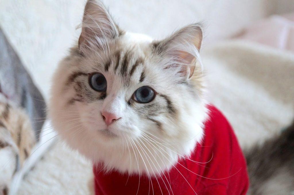 Meet my new cat: Saartje!