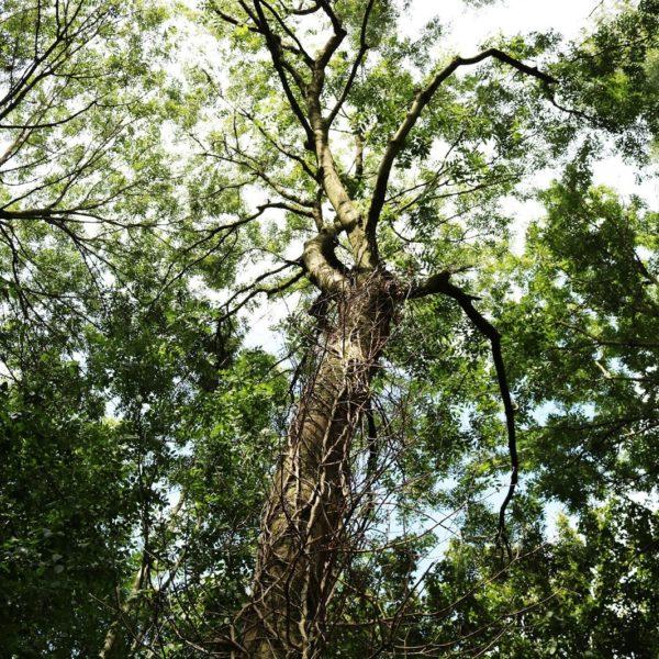 Rust creëren | Wandelen als meditatie
