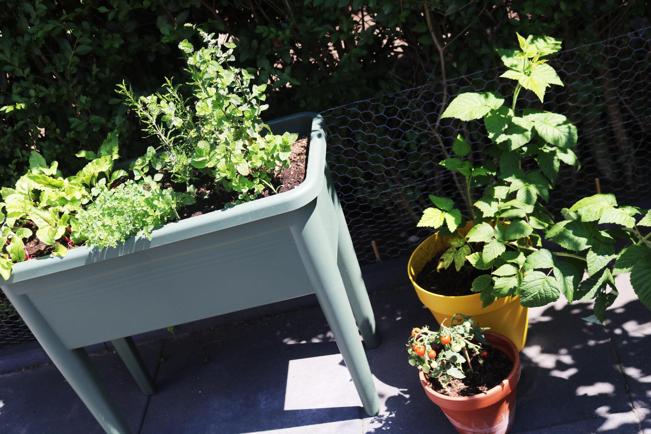 Een kijkje in mijn eigen groene tuintje!