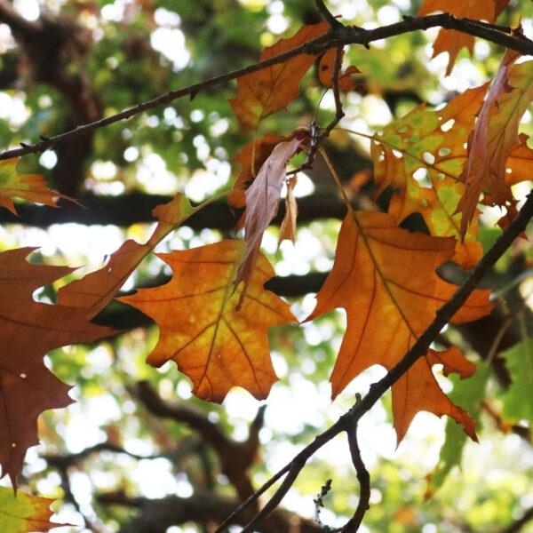 Krijg de herfst sfeer te pakken! Ik geef je 4 tips.